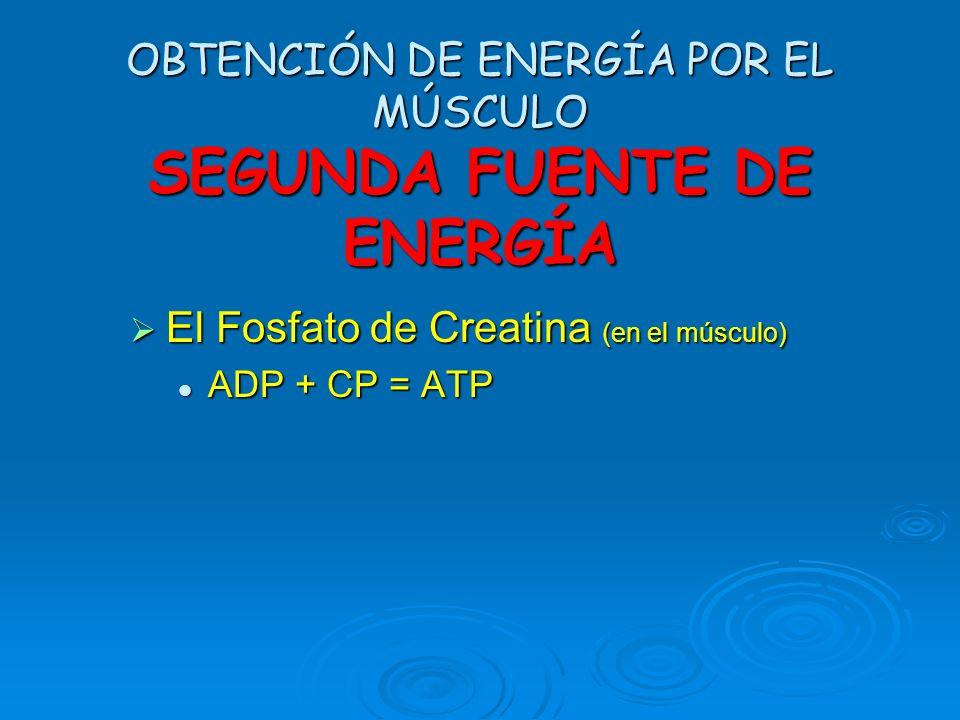 OBTENCIÓN DE ENERGÍA POR EL MÚSCULO Primera Fuente de Energía ATP ADP + P + ENERGÍA