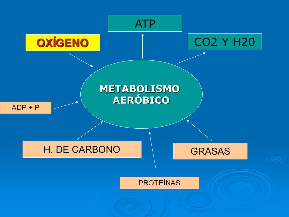 3ª Fuente de Energía: METABOLISMO AERÓBICO Gran eficacia energética. Gran eficacia energética. Intensidad limitada por la capacidad de consumir O 2 (V