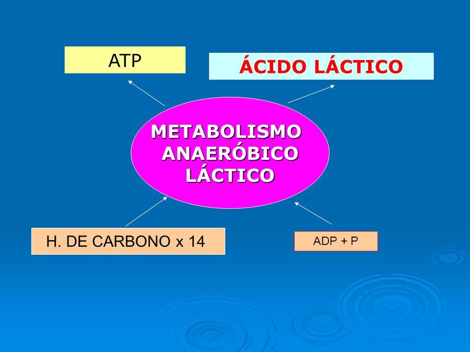 METABOLISMO ANAERÓBICO Poca eficacia energética. Necesita 14 veces más de H. de C. para producir la misma cantidad de energía que el M. Aeróbico. Poca