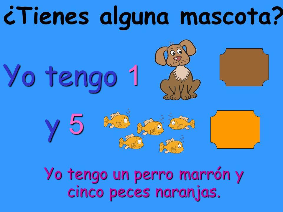 ¿Tienes alguna mascota? Yo tengo 1 y 5. y 5. Yo tengo un perro marrón y cinco peces naranjas.
