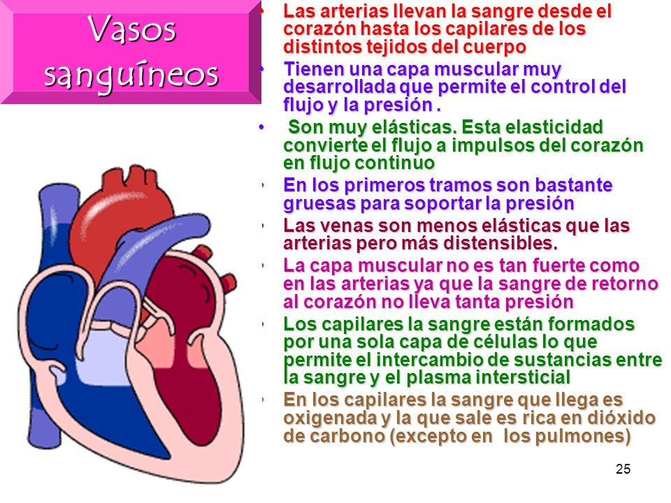 24 Aparato Circulatorio El corazón es un órgano de forma cónica que está situado entre los pulmones en la zona central de la cavidad torácicaEl corazó