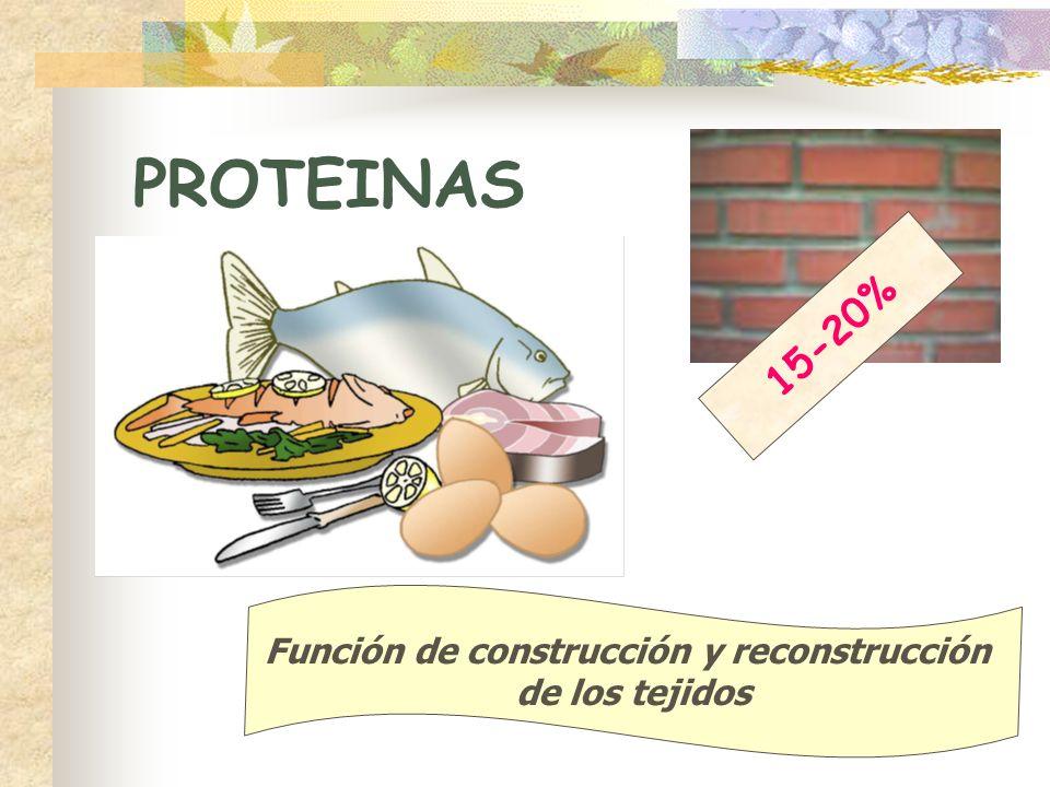 PROTEINAS 15-20% Función de construcción y reconstrucción de los tejidos