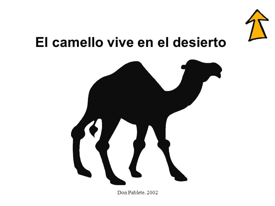 Don Pablete. 2002 calle paella llave olla camello