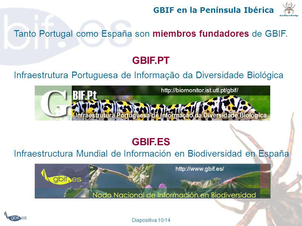 Diapositiva 10/14 GBIF en la Península Ibérica Tanto Portugal como España son miembros fundadores de GBIF. Infraestrutura Portuguesa de Informação da