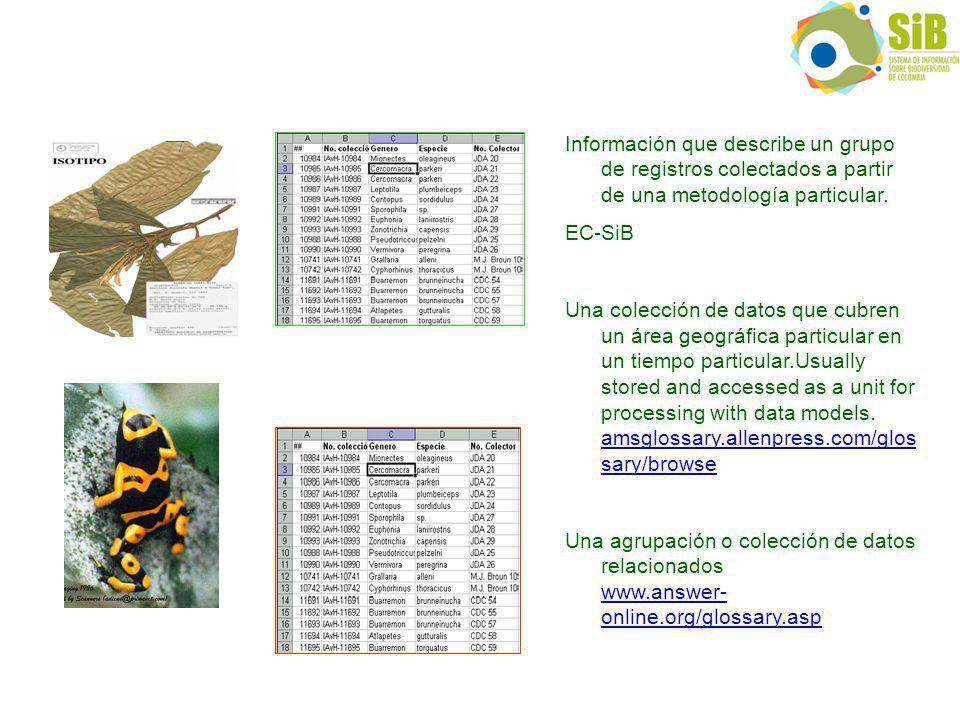 Información que describe un grupo de registros colectados a partir de una metodología particular.