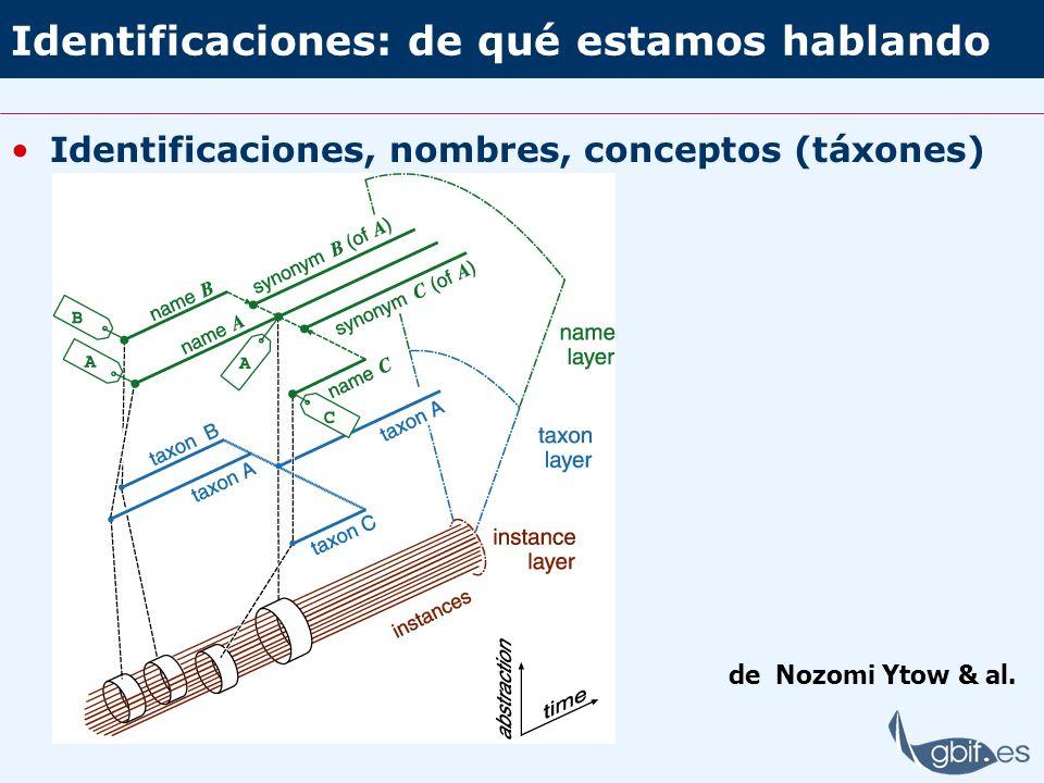 Identificaciones: de qué estamos hablando Identificaciones, nombres, conceptos (táxones) de Nozomi Ytow & al.
