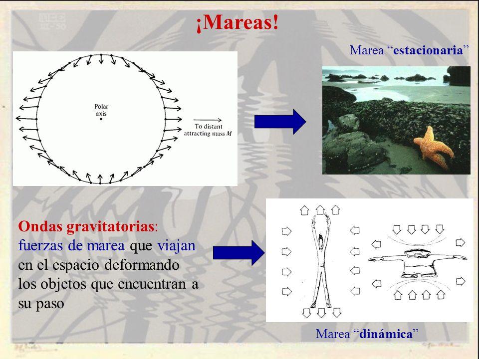 ¡Mareas! Ondas gravitatorias: fuerzas de marea que viajan en el espacio deformando los objetos que encuentran a su paso Marea estacionaria Marea dinám