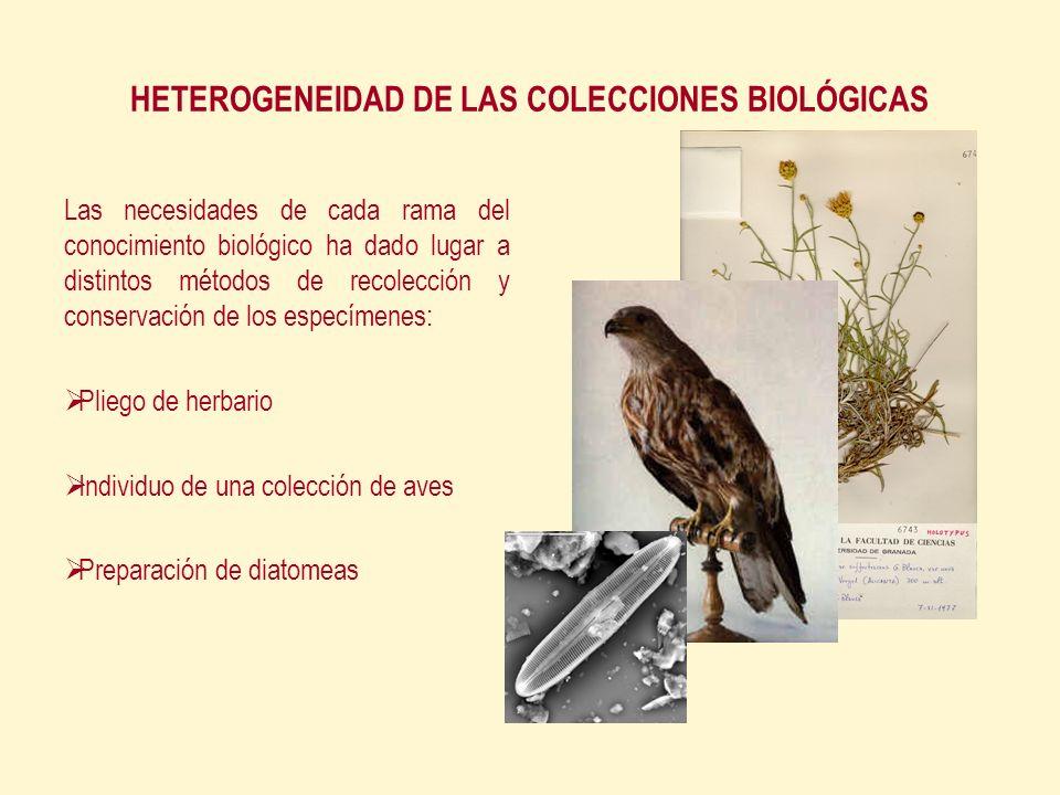 HETEROGENEIDAD DE LAS COLECCIONES BIOLÓGICAS Las necesidades de cada rama del conocimiento biológico ha dado lugar a distintos métodos de recolección y conservación de los especímenes: Pliego de herbario Individuo de una colección de aves Preparación de diatomeas
