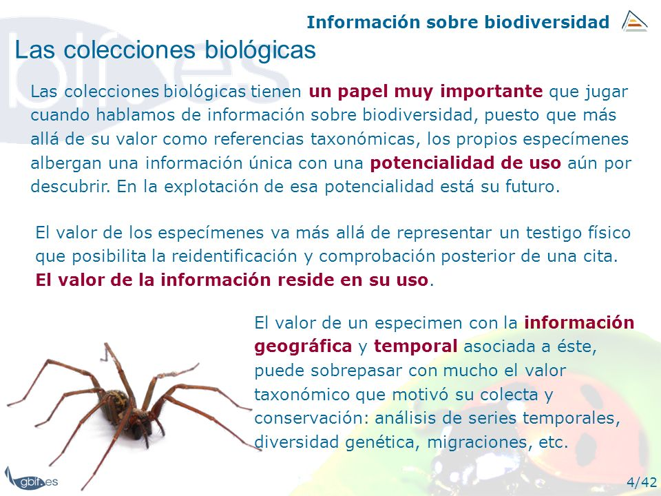 Información sobre biodiversidad 4/42 Las colecciones biológicas Las colecciones biológicas tienen un papel muy importante que jugar cuando hablamos de