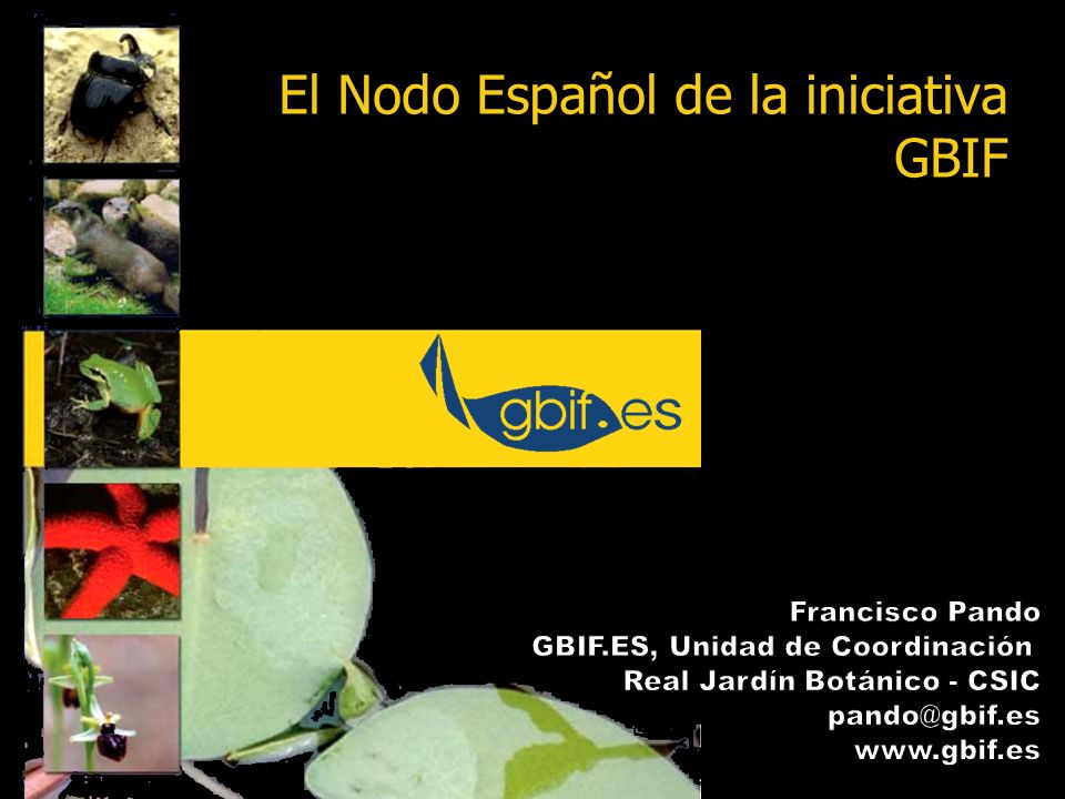 2 Que es GBIF Implementación de GBIF en España Las colecciones como prioridad de GBIF Retos que plantea la explotación de la información de las colecciones Sumario El Nodo Español de la iniciativa GBIF y el papel de las colecciones en el mismo