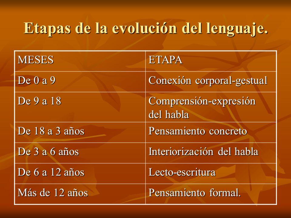 Etapas de la evolución del lenguaje. MESESETAPA De 0 a 9 Conexión corporal-gestual De 9 a 18 Comprensión-expresión del habla De 18 a 3 años Pensamient