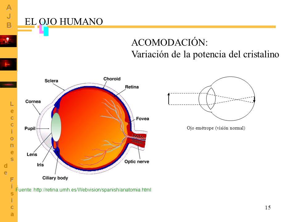 15 Ojo emétrope (visión normal) ACOMODACIÓN: Variación de la potencia del cristalino Fuente: http://retina.umh.es/Webvision/spanish/anatomia.html EL O