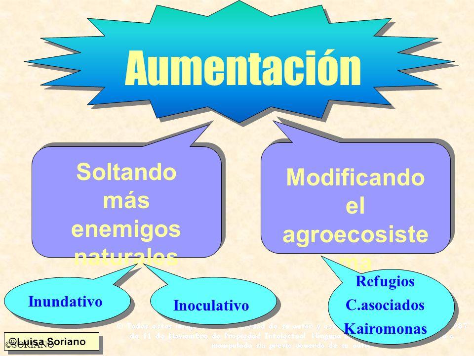 ©Luisa Soriano ©SORIANO Aumentación Soltando más enemigos naturales Modificando el agroecosiste ma Inundativo Inoculativo Refugios C.asociados Kairomo