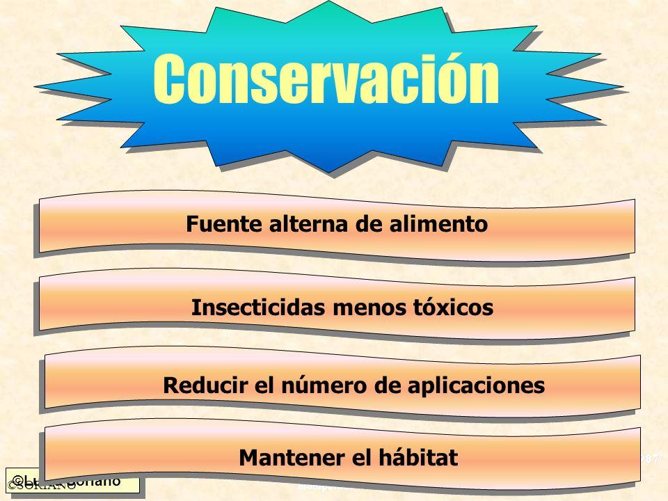 ©Luisa Soriano ©SORIANO Conservación Fuente alterna de alimento Insecticidas menos tóxicos Reducir el número de aplicaciones Mantener el hábitat