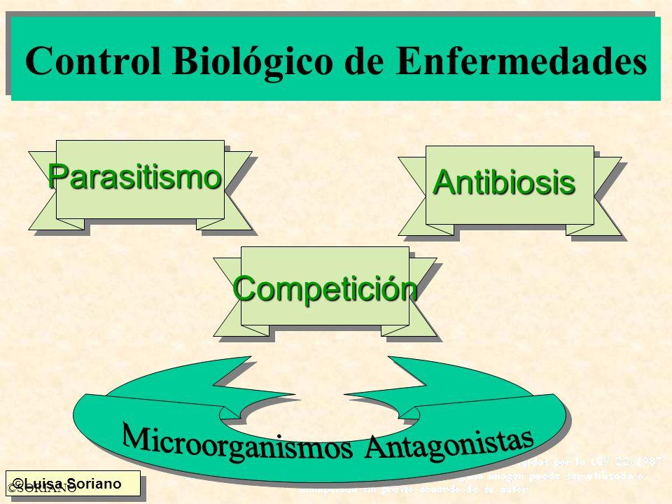 ©Luisa Soriano ©SORIANO Control Biológico de Enfermedades Parasitismo Antibiosis Competición