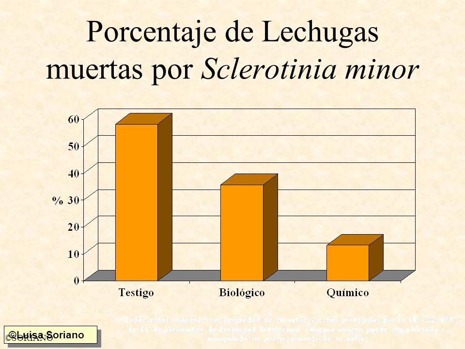 ©Luisa Soriano ©SORIANO Porcentaje de Lechugas muertas por Sclerotinia minor