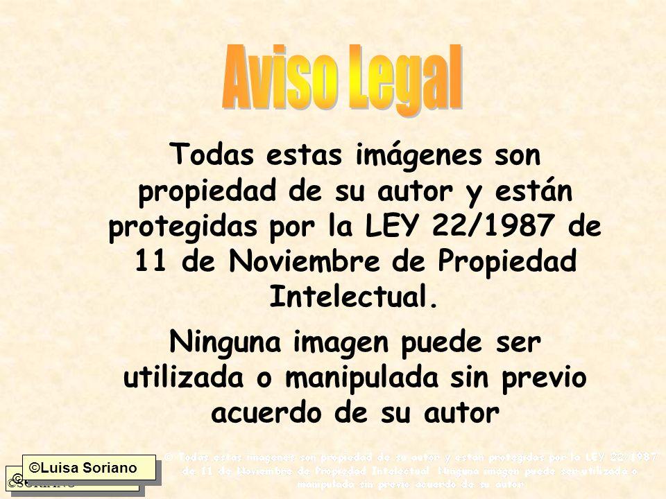 ©Luisa Soriano ©SORIANO Todas estas imágenes son propiedad de su autor y están protegidas por la LEY 22/1987 de 11 de Noviembre de Propiedad Intelectu