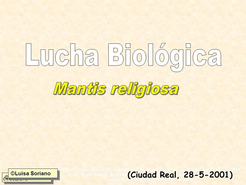 ©Luisa Soriano ©SORIANO ©Luisa Soriano (Ciudad Real, 28-5-2001)