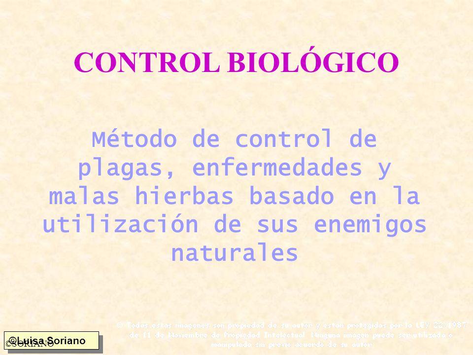 ©Luisa Soriano ©SORIANO Parásitos Parasitoide s Himenopteros Dipteros Coleopteros Lepidopteros Neuropteros Stresipteros Insectos Ácaros