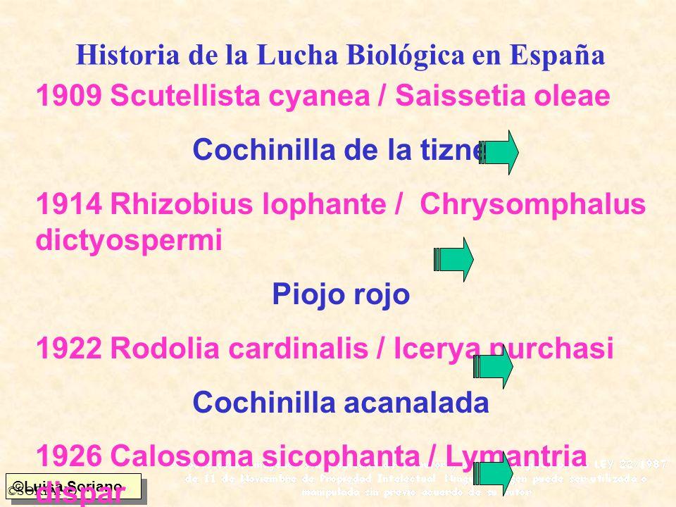 ©Luisa Soriano ©SORIANO Historia de la Lucha Biológica en España 1909 Scutellista cyanea / Saissetia oleae Cochinilla de la tizne 1914 Rhizobius lopha