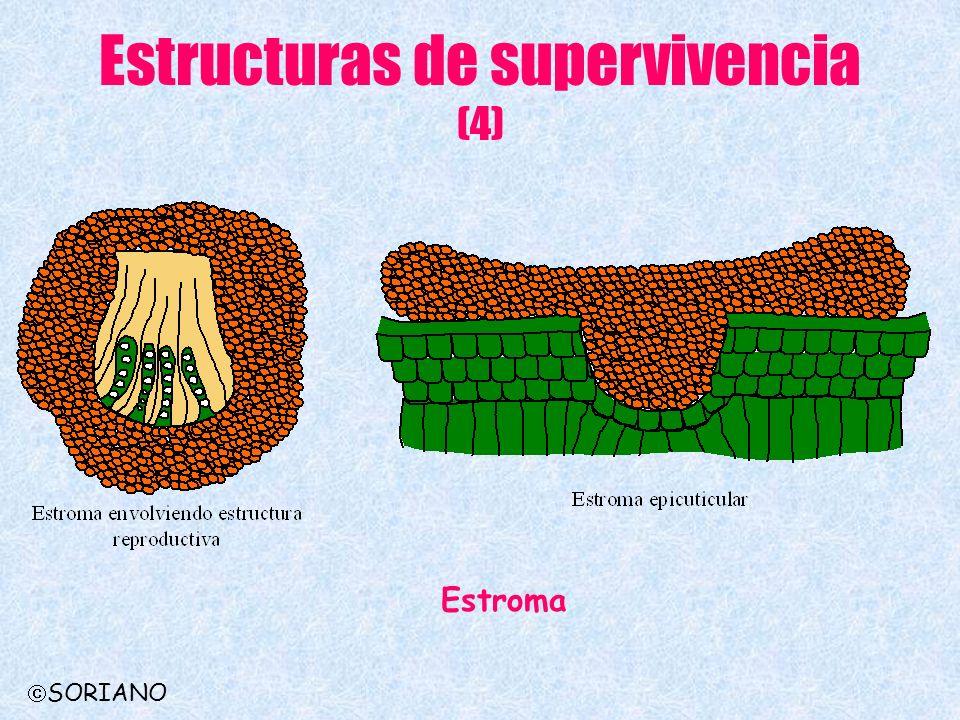 Estructuras de supervivencia (4) Estroma SORIANO