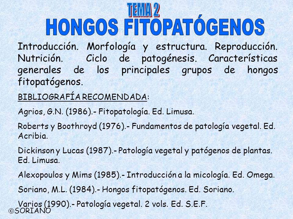 Introducción. Morfología y estructura. Reproducción. Nutrición. Ciclo de patogénesis. Características generales de los principales grupos de hongos fi