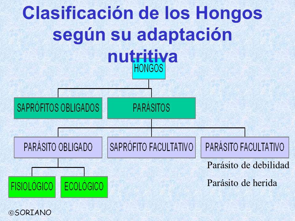 Parásito de debilidad Parásito de herida Clasificación de los Hongos según su adaptación nutritiva SORIANO
