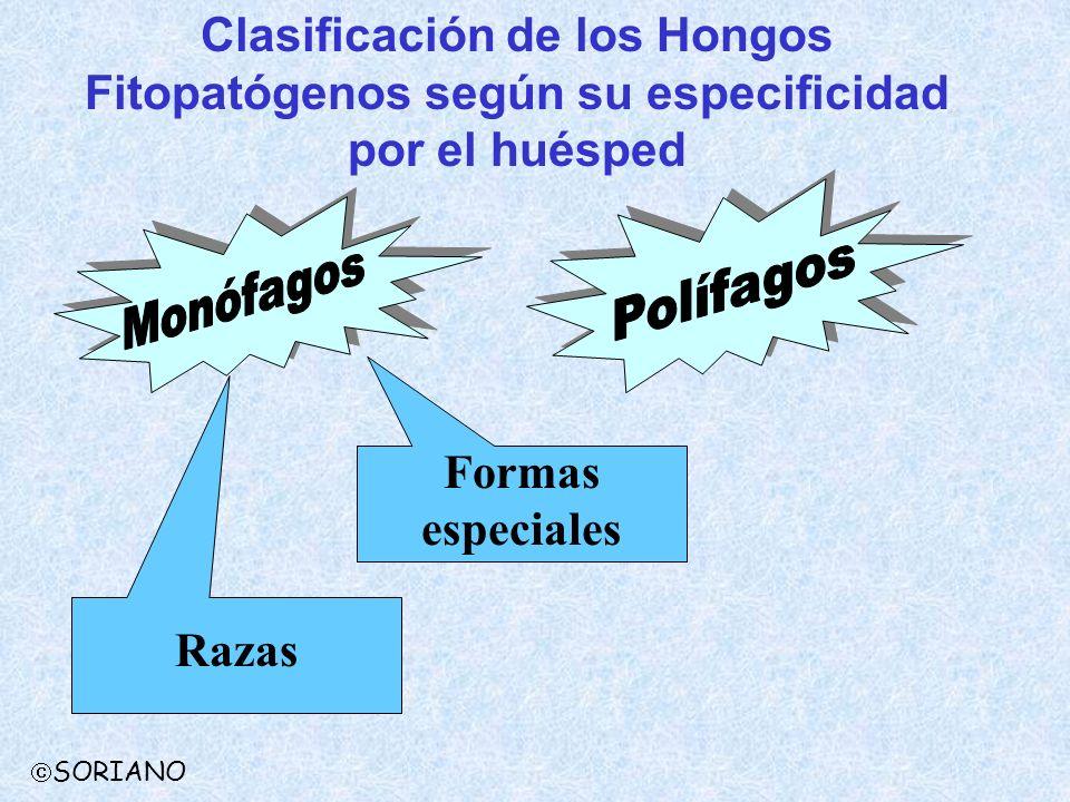Clasificación de los Hongos Fitopatógenos según su especificidad por el huésped Formas especiales Razas SORIANO