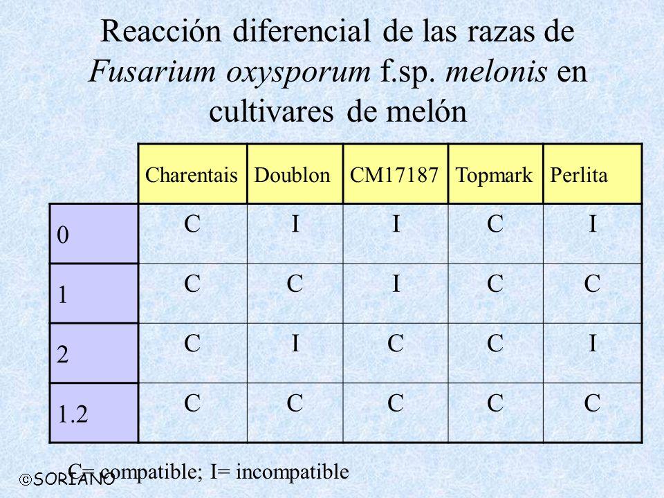 Reacción diferencial de las razas de Fusarium oxysporum f.sp. melonis en cultivares de melón CharentaisDoublonCM17187TopmarkPerlita 0 CIICI 1 CCICC 2