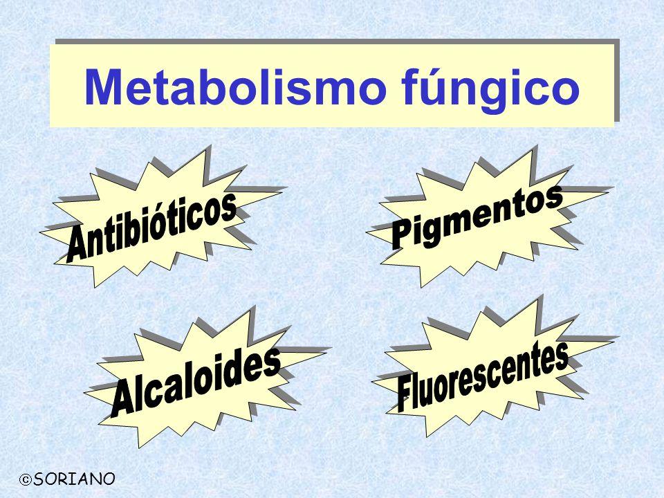 Metabolismo fúngico SORIANO