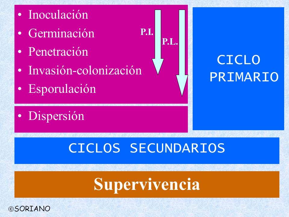 Inoculación Germinación Penetración Invasión-colonización Esporulación Dispersión CICLOS SECUNDARIOS CICLO PRIMARIO Supervivencia P.I. P.L. SORIANO