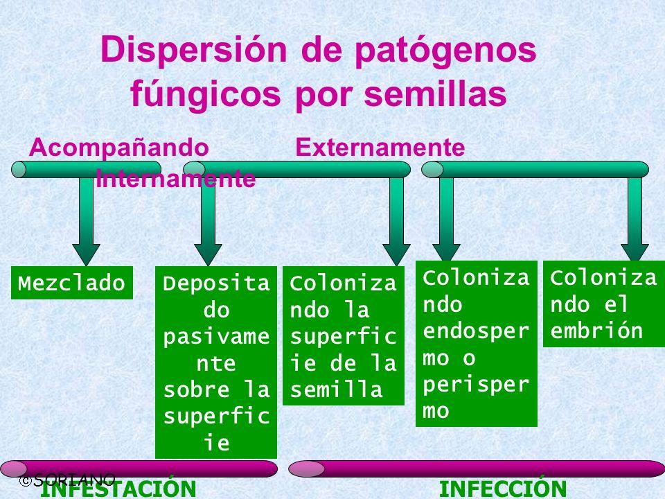 Dispersión de patógenos fúngicos por semillas AcompañandoExternamente Internamente MezcladoDeposita do pasivame nte sobre la superfic ie Coloniza ndo