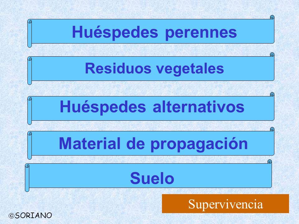 Supervivencia Huéspedes perennes Residuos vegetales Huéspedes alternativos Material de propagación Suelo SORIANO