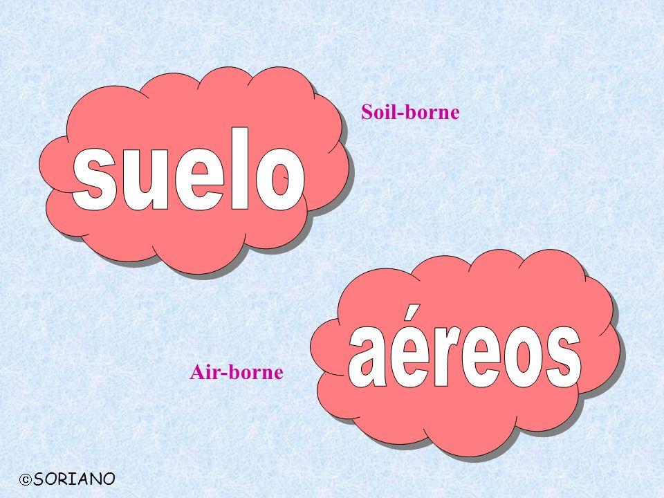 Soil-borne Air-borne SORIANO