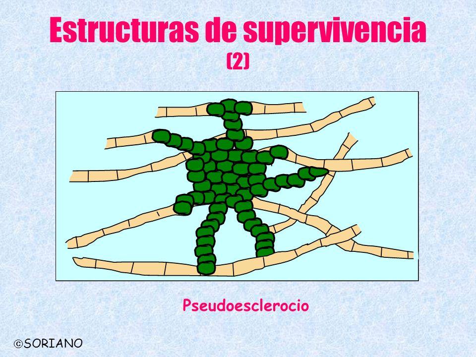 Estructuras de supervivencia (2) Pseudoesclerocio SORIANO