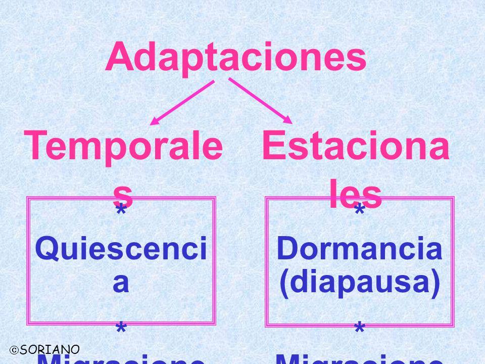 Adaptaciones Temporale s Estaciona les * Quiescenci a * Migracione s * Dormancia (diapausa) * Migracione s