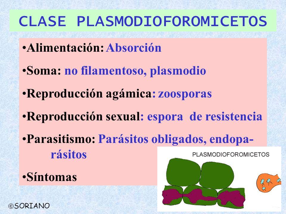 SORIANO CLASE PLASMODIOFOROMICETOS Alimentación: Absorción Soma: no filamentoso, plasmodio Reproducción agámica: zoosporas Reproducción sexual: espora