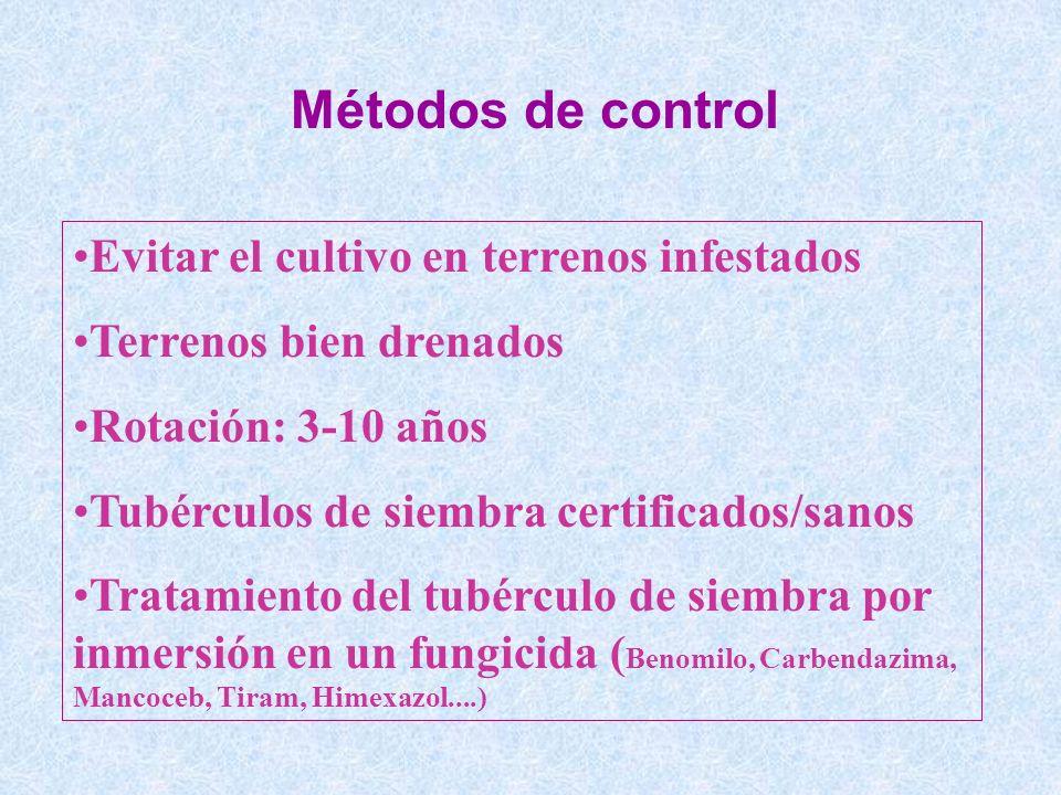 Métodos de control Evitar el cultivo en terrenos infestados Terrenos bien drenados Rotación: 3-10 años Tubérculos de siembra certificados/sanos Tratam