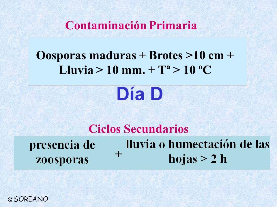 Oosporas maduras + Brotes >10 cm + Lluvia > 10 mm. + Tª > 10 ºC Contaminación Primaria Ciclos Secundarios Día D