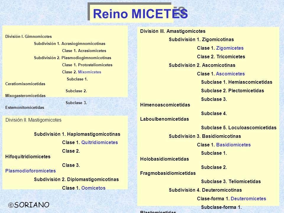 División I. Gimnomicotes Subdivisión 1. Acrasiogimnomicotinas Clase 1. Acrasiomicetes Subdivisión 2. Plasmodiogimnomicotinas Clase 1. Protosteliomicet