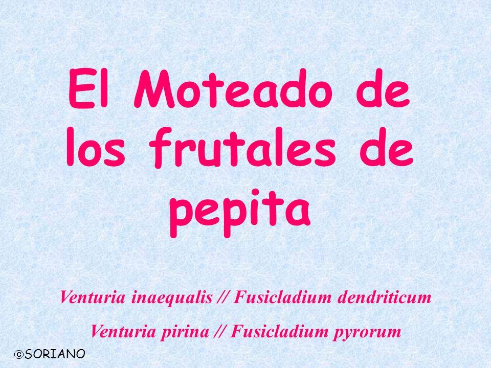 El Moteado de los frutales de pepita Venturia inaequalis // Fusicladium dendriticum Venturia pirina // Fusicladium pyrorum SORIANO