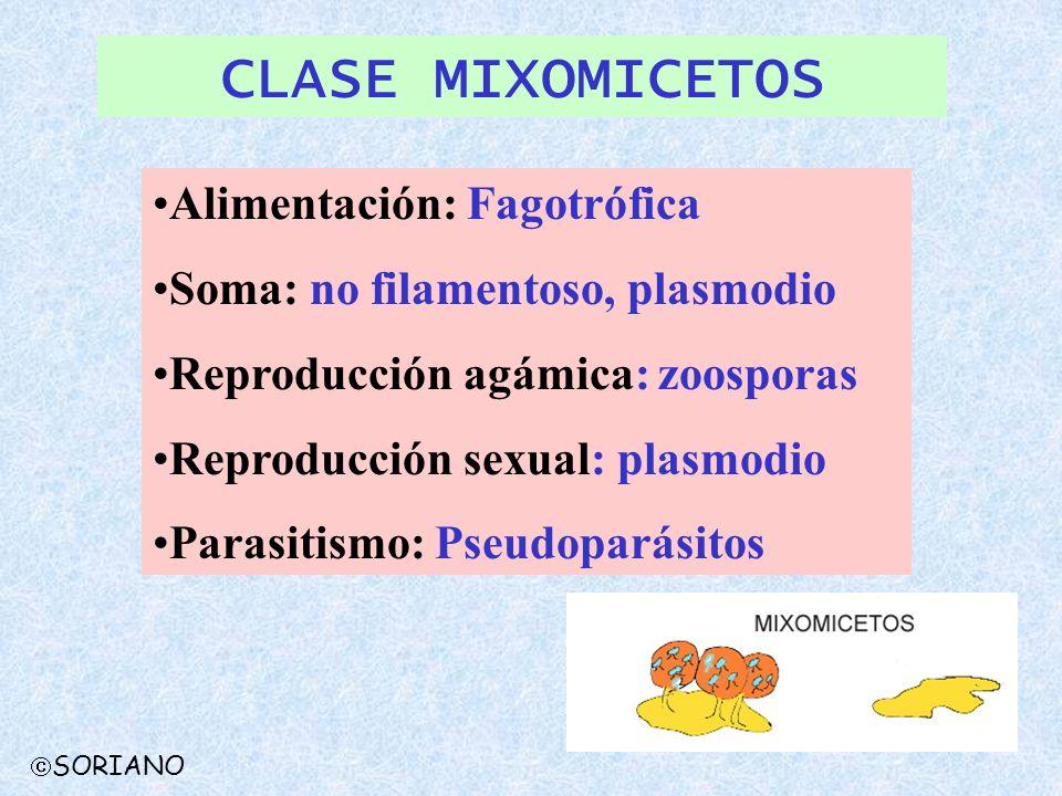 SORIANO CLASE MIXOMICETOS Alimentación: Fagotrófica Soma: no filamentoso, plasmodio Reproducción agámica: zoosporas Reproducción sexual: plasmodio Par
