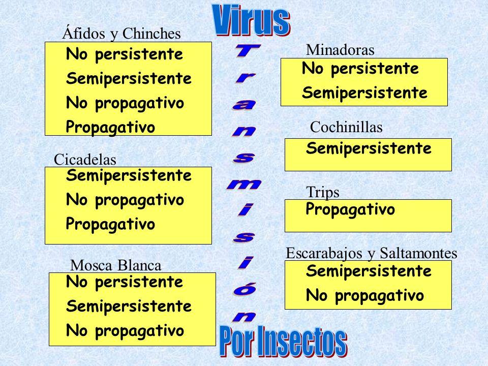 Clasificació n de Fitovirus SORIANO