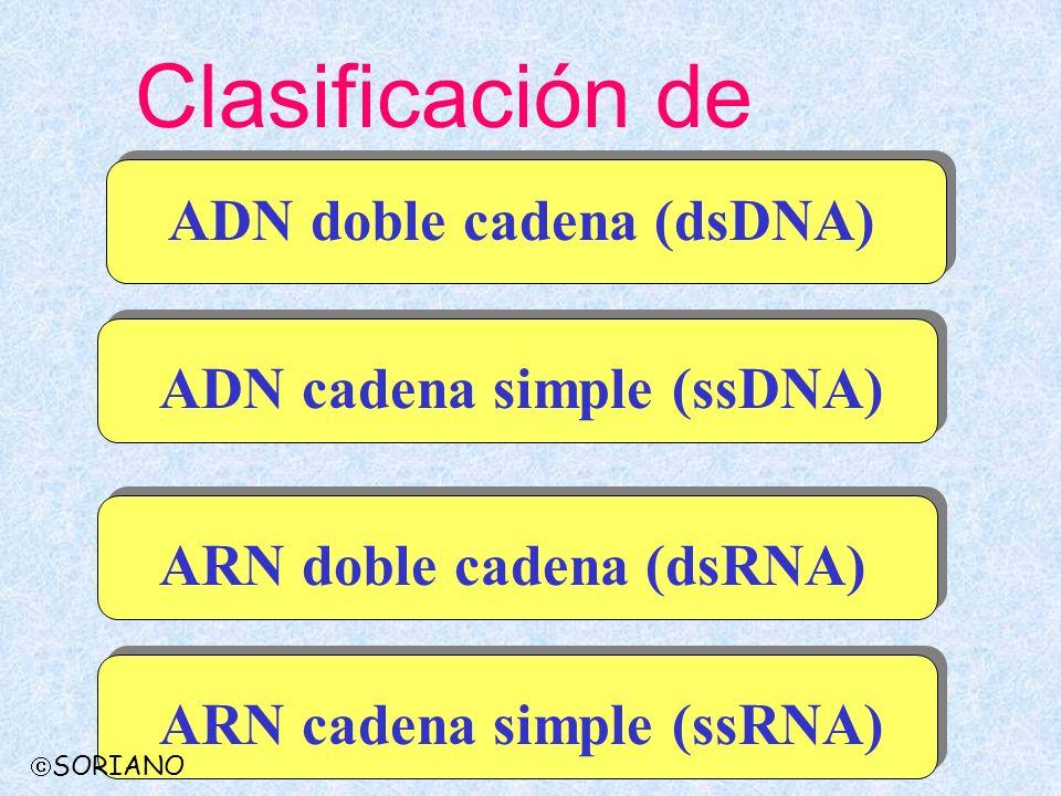 ADN doble cadena (dsDNA) CaulimovirusBadnavirus Partículas isométricas Partículas baciliformes Caulimoviridae SORIANO Caulimoviridae