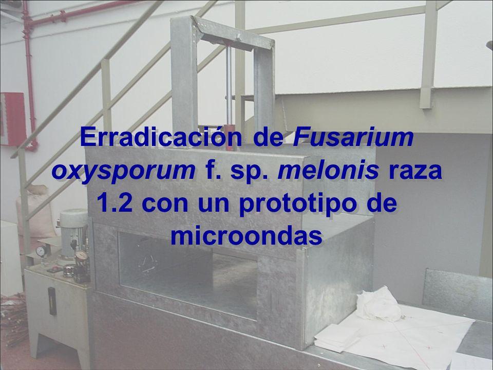 Erradicación de Fusarium oxysporum f. sp. melonis raza 1.2 con un prototipo de microondas