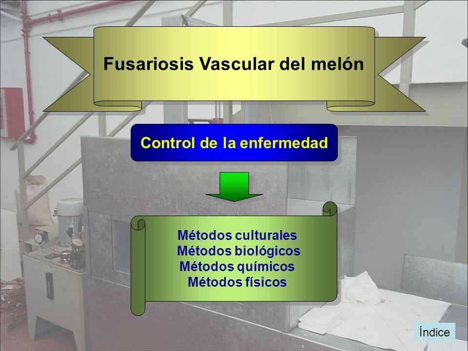 Índice Fusariosis Vascular del melón Control de la enfermedad Métodos culturales Métodos biológicos Métodos químicos Métodos físicos Métodos culturale