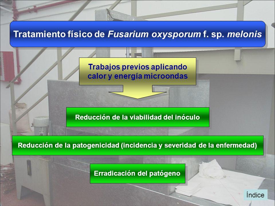 Tratamiento físico de Fusarium oxysporum f. sp. melonis Trabajos previos aplicando calor y energía microondas Trabajos previos aplicando calor y energ
