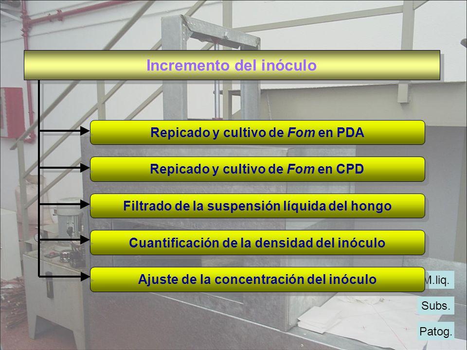 Patog. Subs. M.liq. Incremento del inóculo Repicado y cultivo de Fom en PDA Repicado y cultivo de Fom en PDA Repicado y cultivo de Fom en CPD Repicado