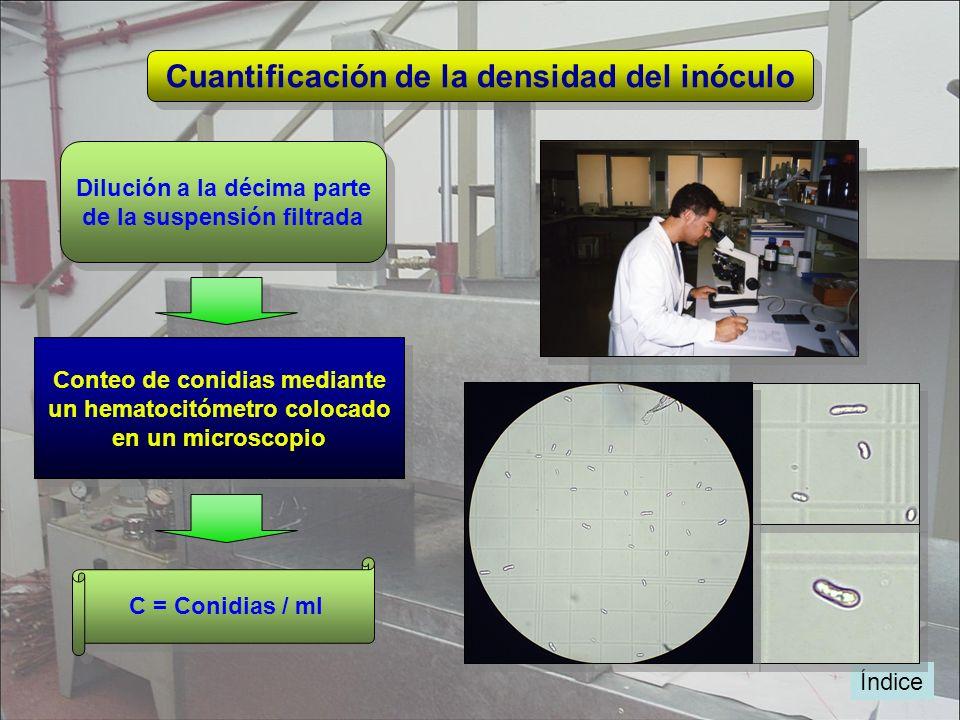 Índice Cuantificación de la densidad del inóculo Dilución a la décima parte de la suspensión filtrada Dilución a la décima parte de la suspensión filt