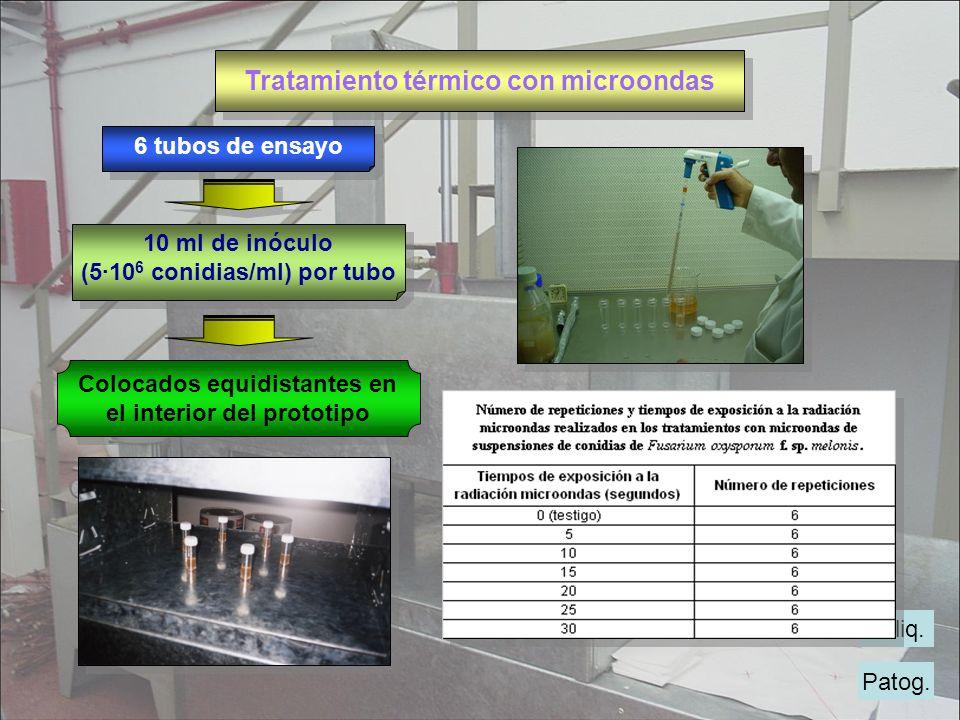 Tratamiento térmico con microondas Patog. M.liq. 10 ml de inóculo (510 6 conidias/ml) por tubo 10 ml de inóculo (510 6 conidias/ml) por tubo 6 tubos d